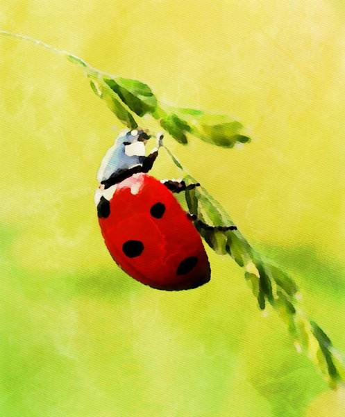 Lucky Charm Painting - Ladybug - Id 16235-220501-0469 by S Lurk
