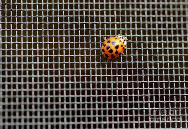 Photograph - Ladybug, Ladybug, Fly Away Home by Karen Adams
