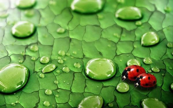 Pattern Digital Art - Ladybug by Maye Loeser