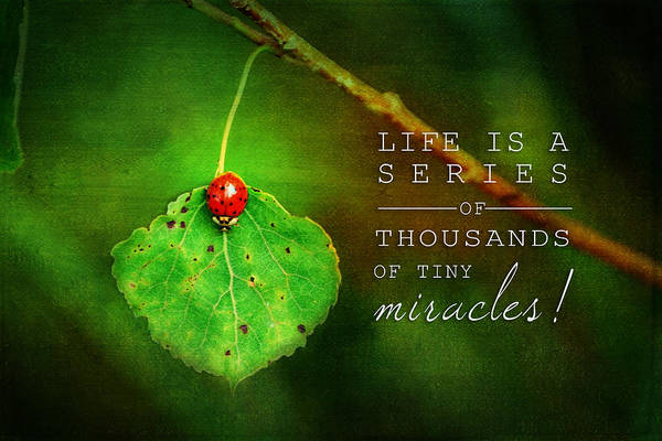 Painting - Ladybug On Leaf Thousand Miracles Quote by Christina VanGinkel