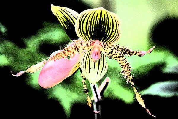 Lady's Slipper Orchid Art Print by Nanette Hert