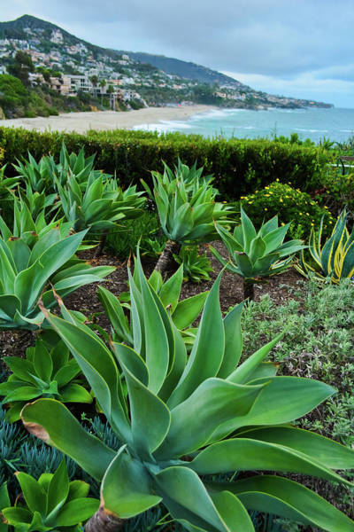 Photograph - Laguna Beach Gardens by Kyle Hanson