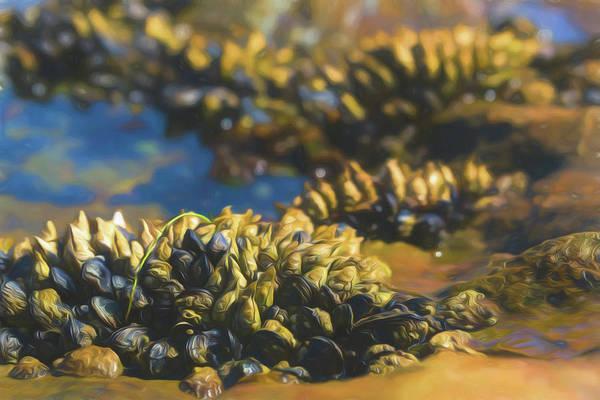 Photograph - Laguna Beach Tide Pool Pattern 4 by Scott Campbell