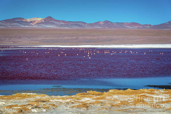 Wall Art - Photograph - Laguna Colorada, Bolivia by Delphimages Photo Creations