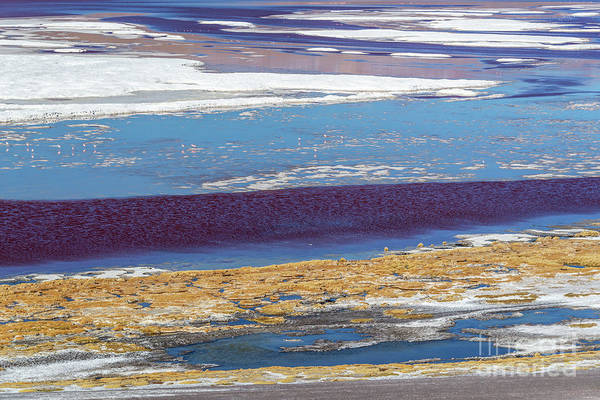 Bolivia Photograph - Laguna Colorada, Bolivia, Nature Abstract by Delphimages Photo Creations