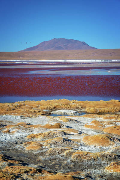 Bolivia Photograph - Laguna Colorada, Bolivia, Vertical by Delphimages Photo Creations