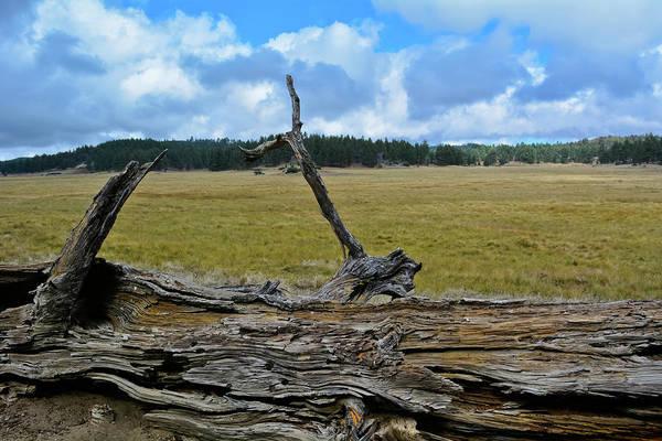 Photograph - Laguna Meadow Vista by Kyle Hanson