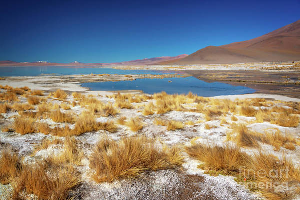 Wall Art - Photograph - Laguna Polques, Sud Lipez Bolivia  by Delphimages Photo Creations