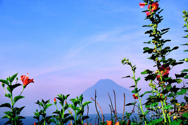 Photograph - Lake Atitlan Flowers And Peaks by Thomas R Fletcher