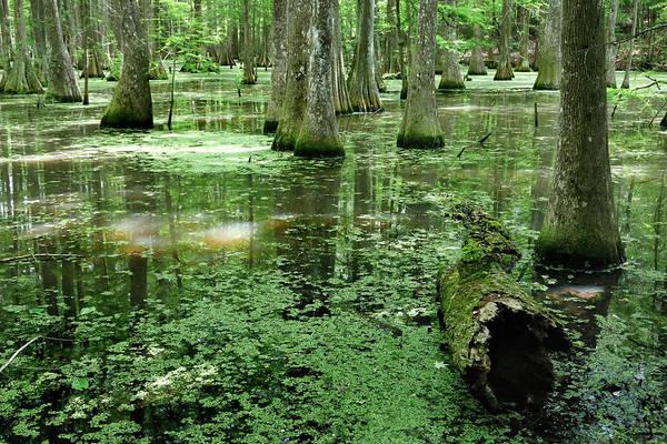Photograph - Lake Chicot by Nicholas Blackwell