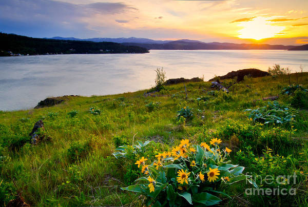 Balsamorhiza Sagittata Photograph - Lake Coeur D'alene Spring by Idaho Scenic Images Linda Lantzy