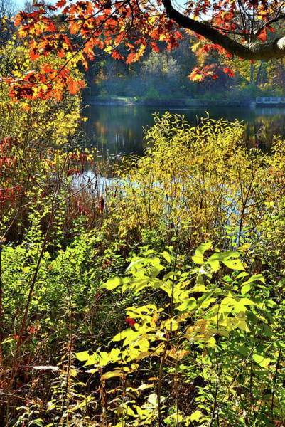 Photograph - Lake County Fall Colors - Dan Wright Woods by Ray Mathis