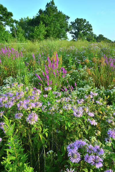 Photograph - Lake County Wildflowers by Ray Mathis