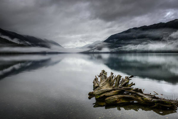 Olympic Peninsula Photograph - Lake Crescent Relic by Dan Mihai
