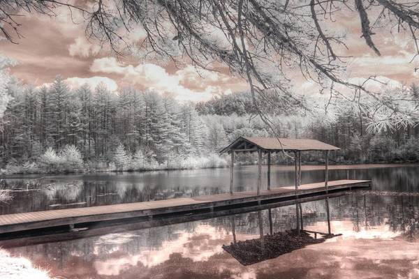 Wall Art - Photograph - Lake Dense Dupont Forest North Carolina by Jane Linders