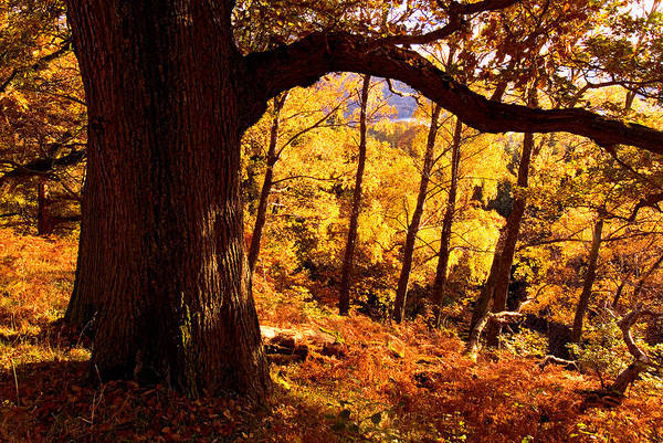 Lake District - Fall Colors Near Aira Force Art Print by Dave Lawrance