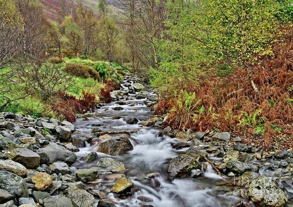Photograph - Lake District Autumn Stream by Martyn Arnold