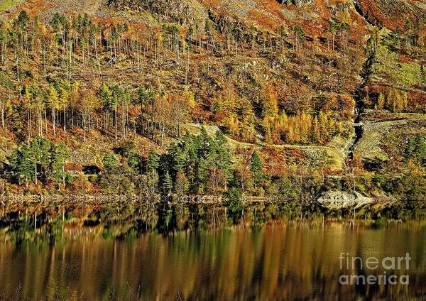Photograph - Lake District Autumn Tree Reflections by Martyn Arnold