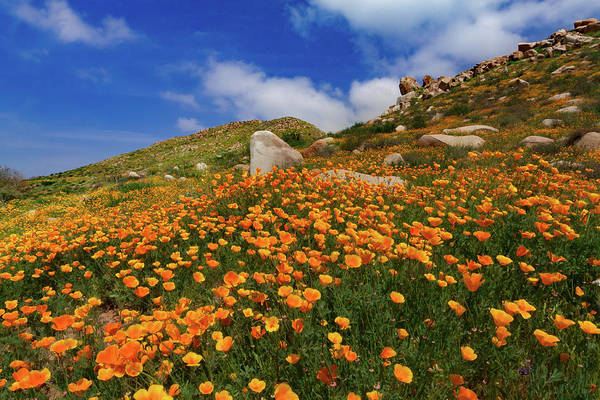 Wall Art - Photograph - Lake Elsinore Poppy Rock Garden by Bridget Calip
