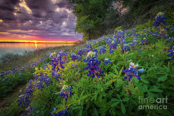Wall Art - Photograph - Lake Grapevine Twilight by Inge Johnsson