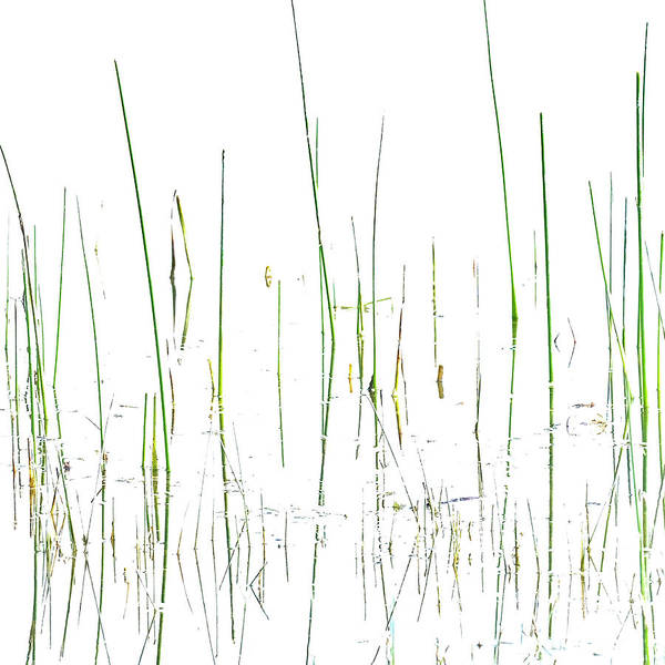 Lake Grass Art Print