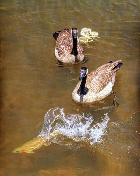 Photograph - Lake Life by James BO Insogna