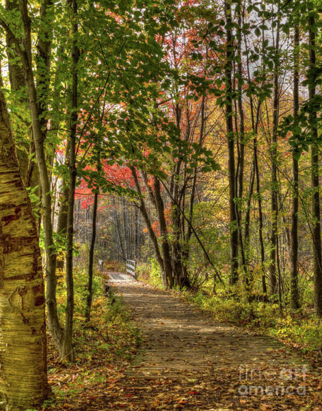 Photograph - Lake Loop In Fall by Rod Best