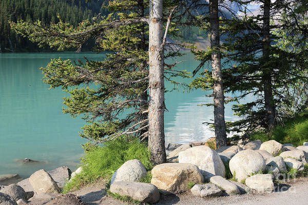 Photograph - Lake Louise With Rocks And Trees by Carol Groenen
