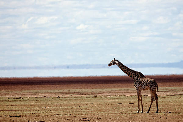 Photograph - Lake Manyara Study II by John  Nickerson