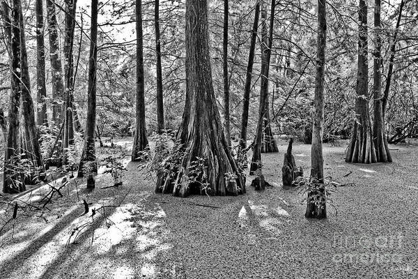 Trapping Photograph - Lake Martin by Scott Pellegrin