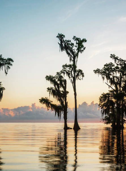 Photograph - Lake Maurepas Sunrise Triptych No 2 by Andy Crawford