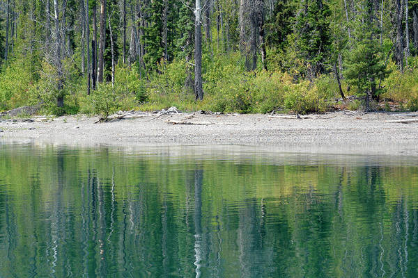 Photograph - Lake Mcdonald Shoreline Reflection by Bruce Gourley