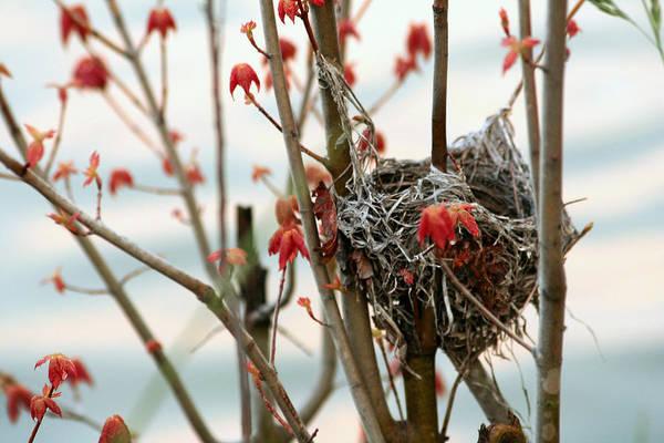 Empty Nest Wall Art - Photograph - Lake Nest by Brian M Davis Photography