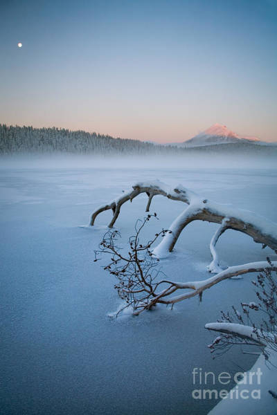 Photograph - Lake Of The Woods In Winter, Or by Sean Bagshaw
