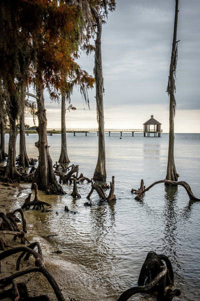 Cypress Knees Photograph - Lake Pontchartrain Uncropped by Paul Freidlund