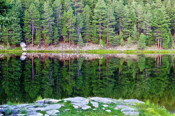 Photograph - Ponderosa Reflection by William T Templeton