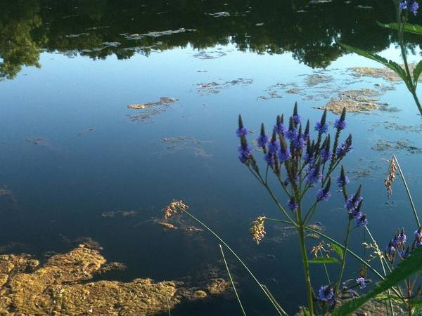 Lillypad Photograph - Lake Side by Trish Hale