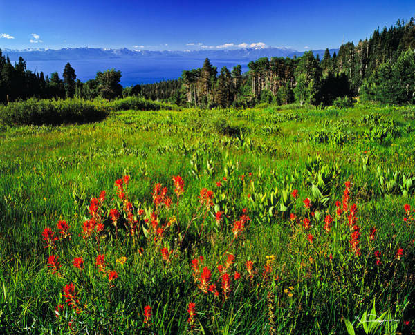Wall Art - Photograph - Lake Tahoe Field With Wild Flowers by Vance Fox