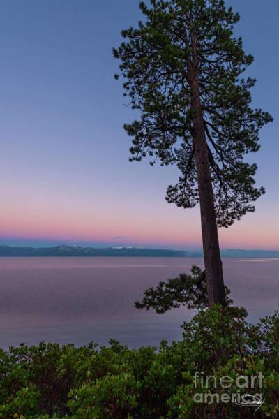 Wall Art - Photograph - Lake Tahoe Tree by Vance Fox