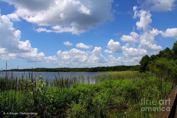 Photograph - Lake Tarpon by Barbara Bowen