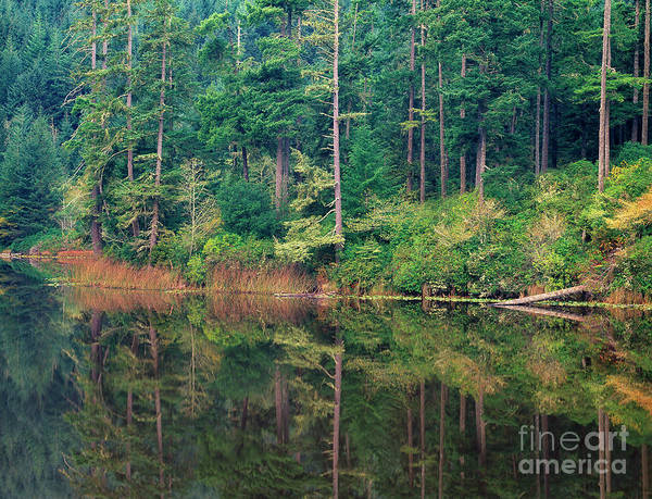 Photograph - Lake Temperate Rainforest Reflectionnear Florence Oregon by Dave Welling