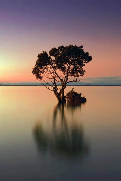 Wall Art - Photograph - Lake Tree Twilight by Daniel Hagerman