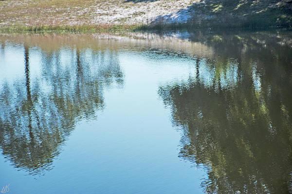 Photograph - Lake Trees Reflection by Gina O'Brien