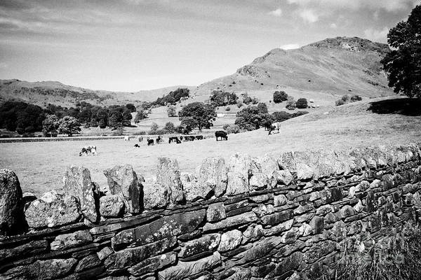 Grasmere Wall Art - Photograph - Lakeland Stone Slate Dry Stone Wall With Fields And Hills Near Grasmere In The Lake District Cumbria by Joe Fox