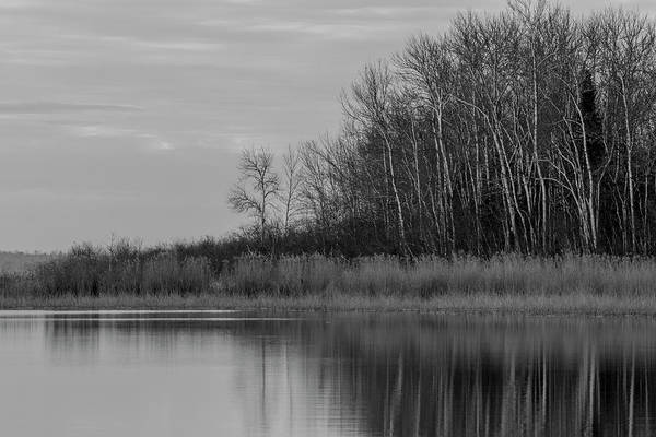 Photograph - Lakeshore Reflection - Bw by Patti Deters