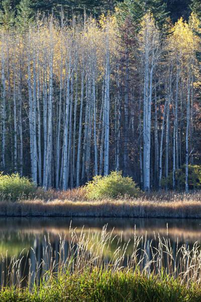 Photograph - Lakeside Glow by Denise Bush