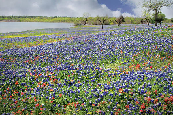 Wall Art - Photograph - Lakeside Texas Bluebonnets by David and Carol Kelly
