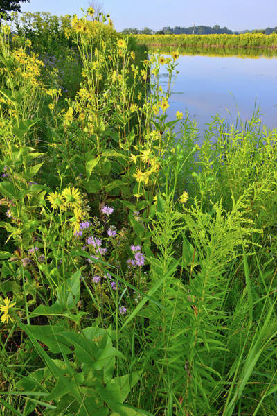 Photograph - Lakeside Wildflowers In Lake County by Ray Mathis