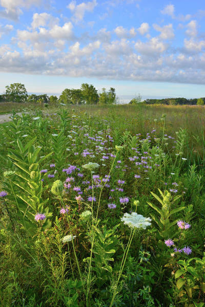 Photograph - Lakewood Bike Trail Wildflowers by Ray Mathis