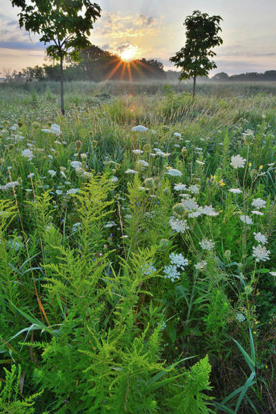Photograph - Lakewood Goldenrod And Queen Anne's Lace by Ray Mathis